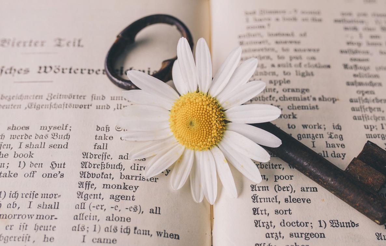 překladač a květina